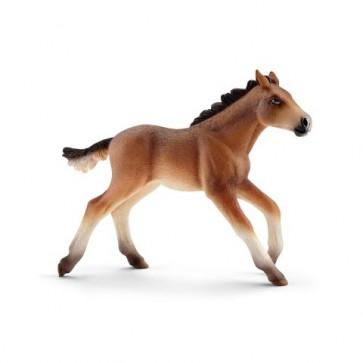 Mustang Fohlen