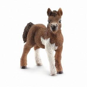 Shetland Pony Fohlen