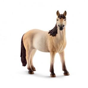 Mustang Stute