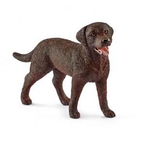 Labrador Retriever Hündin