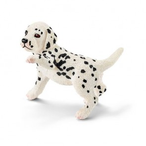 Dalmatiner Welpe